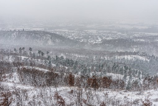 Winter, Cold, Fog, Snowy, Snow, Ice, Landscape, Nature