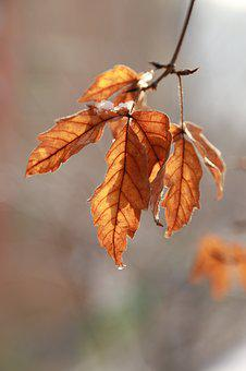 Leaves, Leaf, The Leaves, Autumn Leaves, Brown, Nature