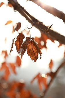 Leaves, Leaf, Autumn, The Leaves, Autumn Leaves, Brown