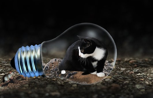 Cat, Mouse, Light Bulb, Animal, Hunting, Catch, Funny