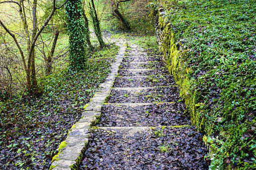 Nature, Path, Steps, Trail, Greenery, Lonely, Forest