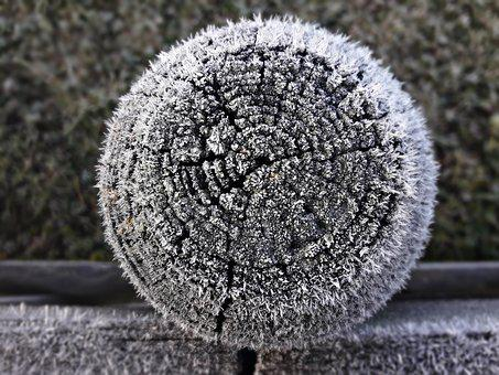 Tree, Peg, Frost, Snow, Winter, Wood