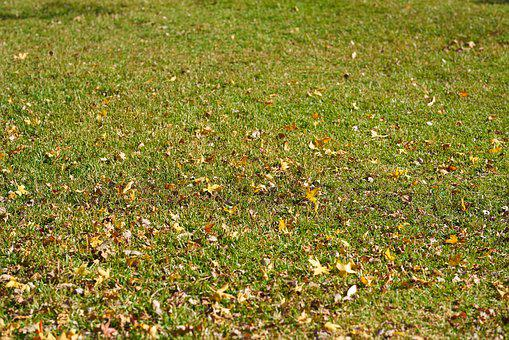 Grass, The Leaves Are, Green, Nature, Plant, Garden