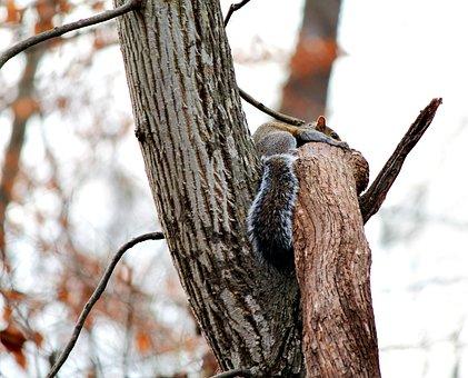 Squirrel, Nature, Animal, Furry, Tree, Mammal, Small