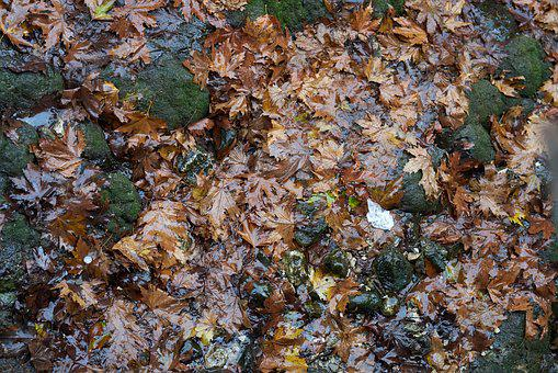Leaves, Autumn, Terry, Tree, Forest, Yellow, Dry, Wet