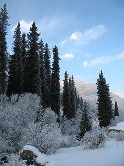 Mountain Forests, Winter, Tien-shan, Ala-archa