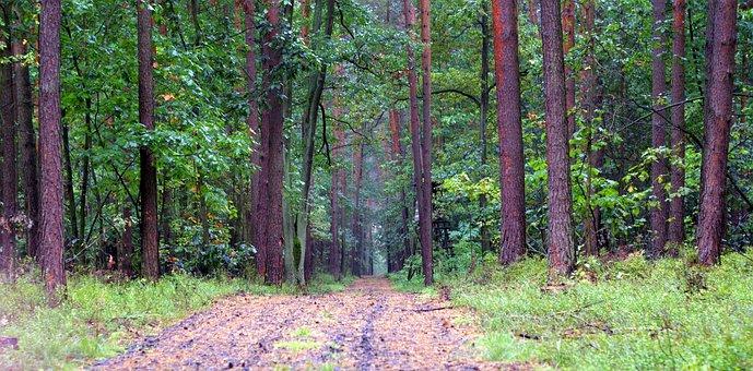 Forest, Old, Way, Leśna, Green, Autumn, Rainy, Wet
