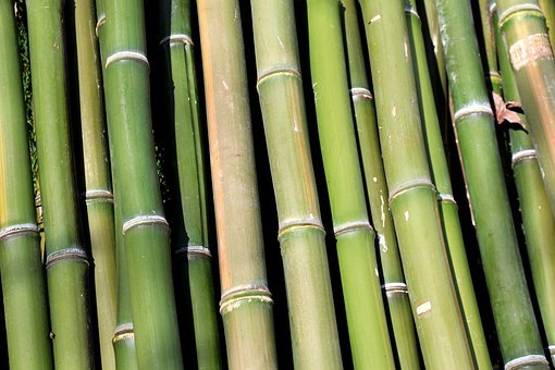 Bamboo, Green, Woods, Long, Tall, Hollow, Natural