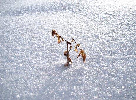Snow, Winter, Bush, Beech, Loneliness, Cold