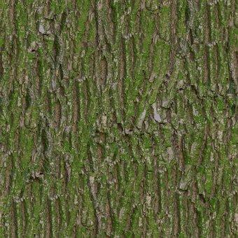 Bark, Moss, Tileable, Texture, Albedo, Base, Color