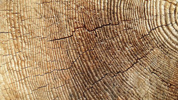 Invoice, Cross Section, Wood