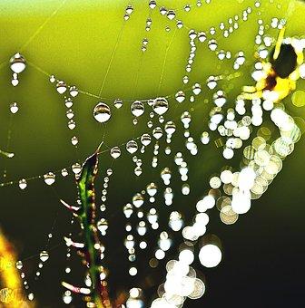 Drops Of Water, Rosa, Macro, Cobweb, The Stem