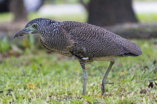 Luminous Bird, Night 鷺, Ecology, Taichung Park