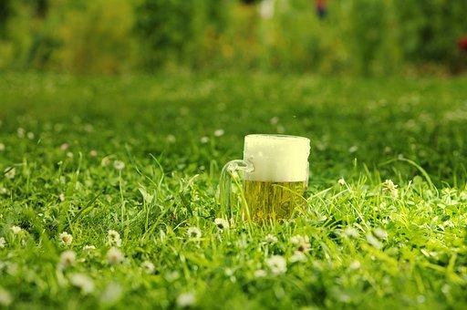 Beer Mug, Meadow, Drinking Green, Flowers, Festival
