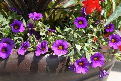 Flower, Purple, Pot, Decor, Flower Pot, Flowers In Pots