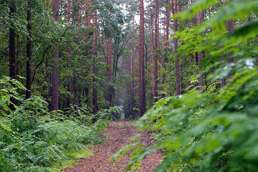 Forest, Green, Autumn, Rainy, Wet, Moss, Foliage, Drops