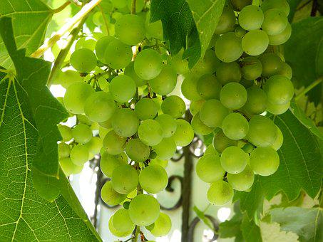 Grapes, White, Green, Fruit, Winegrowing, White Grapes