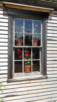 Geranium, Window, Red, Flower, Plant, Clay Pot