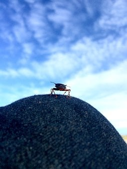 Insect, Sky, Flying Insect, Knee, On The Knee, Small