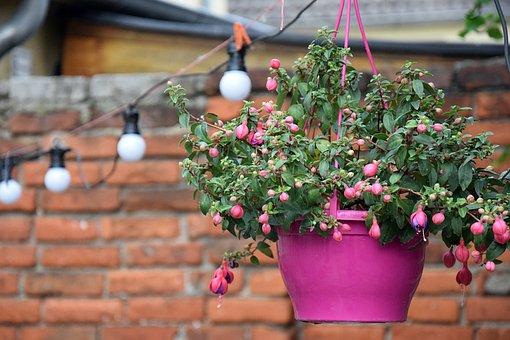 Flowerpot, Hanging Plant, Pink, Pot, Garden