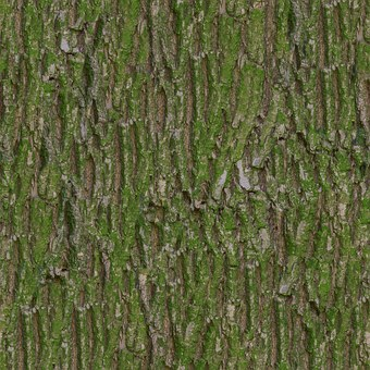Bark, Moss, Tileable, Texture, Albedo, Base, Color