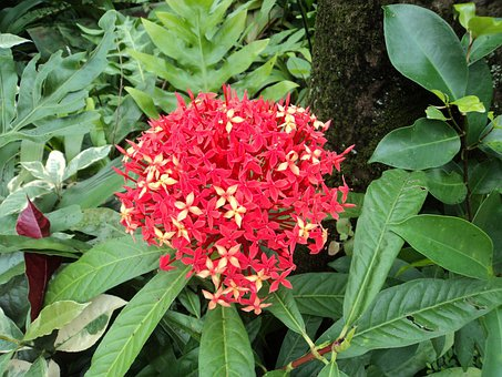 Red Santan, Red Flower, Small Flower, Tiny Flower