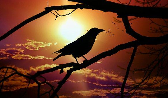 Crow, Bird, Animal, Silhouette, Branch, Tree, Sun