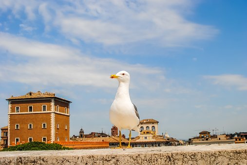 Rome, Bird, Italy, Nature, Seagull, Wings, Architecture