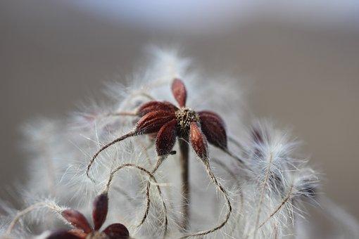 Blossom, Bloom, Winter, Macro, Cold