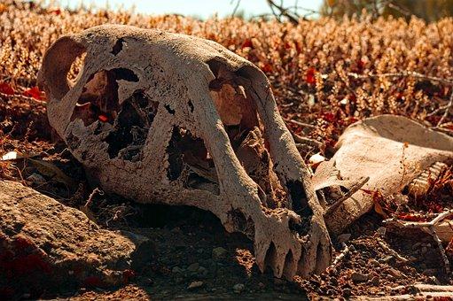 Horse Skull On Sod Roof, Skull, Bone, Death, Dead