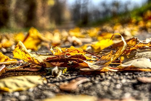 Leaves, Colorful, Autumn, Ground, Fallen Down, Nature