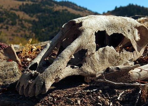 Skull Of Horse On Sod Roof, Skull, Bone, Death, Dead