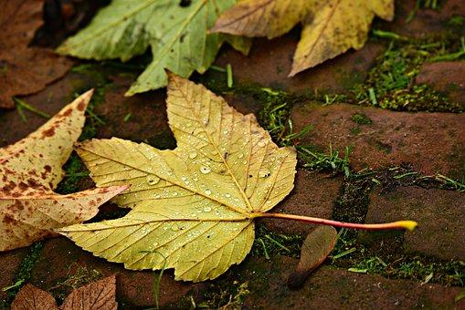 Autumn Leaf, Fallen, Vein, Pattern, Stem, Droplets