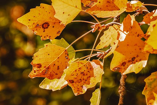 Autumn, Fall Leaves, Leaves, Emerge, Color, Fall Color