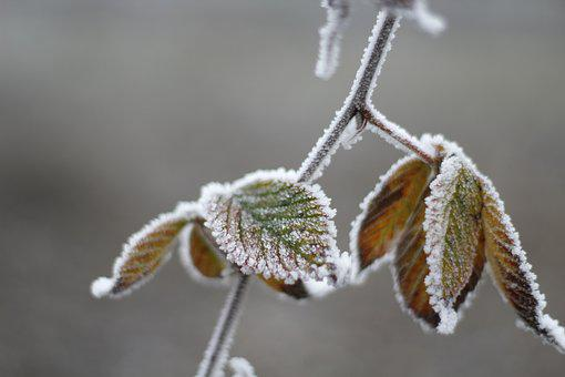Leaves, Frost, Winter, Frozen, Ice, Texture, Nature