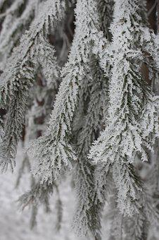 Frosty, Tree, Winter, Nature, Cold, Frost, Ice, Icy