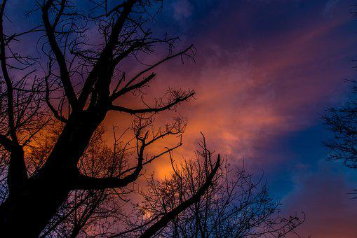 In The Evening, Silhouette, Tree, Sky, Fire, Clouds