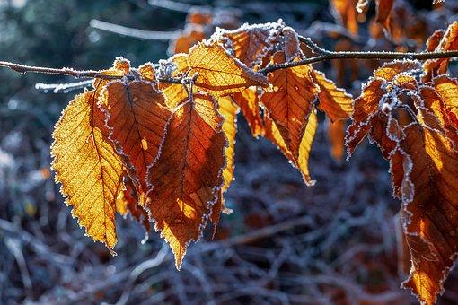 Winter, Hoarfrost, Frost, Frozen, Leaf, Ice, Crystal