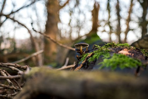 Mushroom, Forest, Closeup, Macro, Green, Tree, Wet