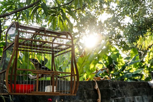 Nature, Cage, Pet, Pen, Plumage, Beautiful, Zoo