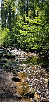 Palatinate Forest, Creek, Water, Forest, Short Trip