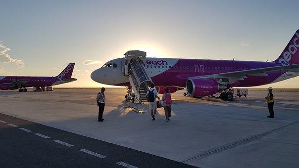 Peach, Airline, Peach Airline, Airport, Airplane, Plane