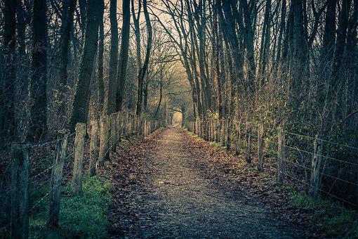 Forest, Path, Rain, Winter, Green, Fence