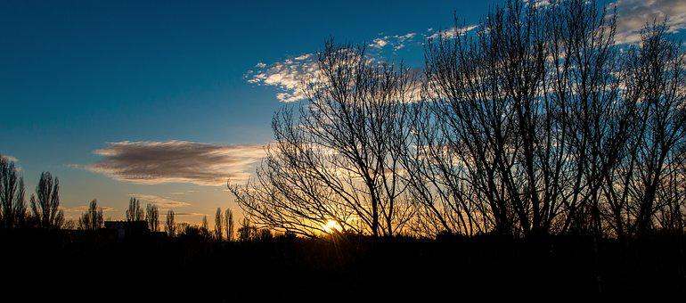 Sunset, The Sky, Sky, Clouds, Trees, Silhouette