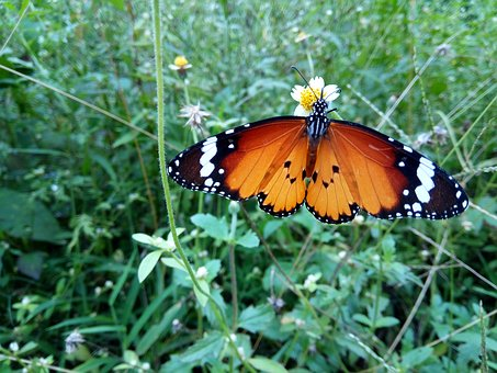 Single, Butterfly, In, Ground