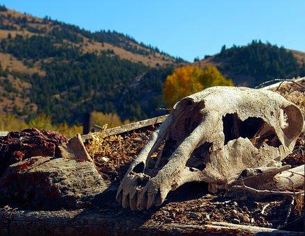 Horse's Skull On Sod Roof, Skull, Bone, Death, Dead