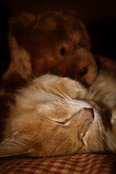 Cat, Sleep, Pet, Animal, Sleeping, Cute, Relax, Baby