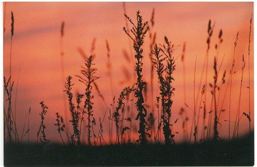 Sunset, Silhouette, Plants