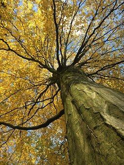Autumn, Tree, Forest, Landscape, Nature, Leaves