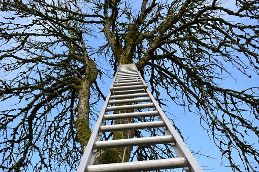 Wallpaper, Ladder, Climb, Tree